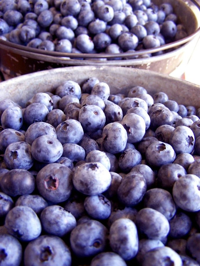 Blueberry Festival, South Haven, Michigan [once considered the blueberry capital of the world]