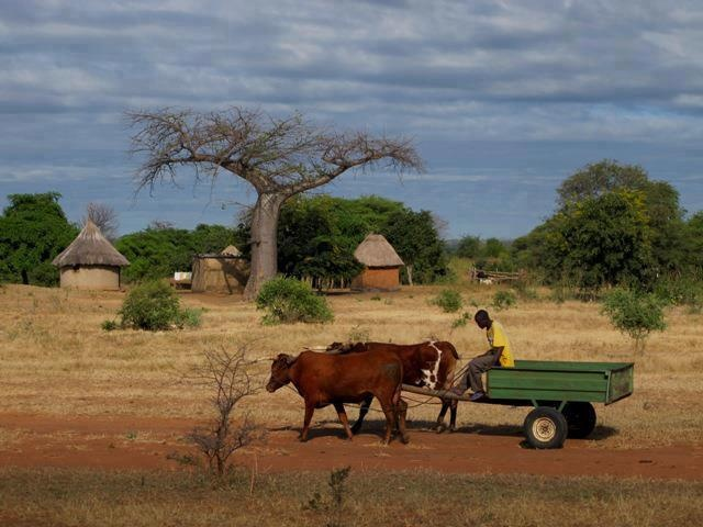 Rural scene in Zimbabwe, Africa. Travel to Zimbabwe with INSPIRATION ZIMBABWE, your boutique Destination Management Company (DMC) for all inbound travel to Zimbabwe, Africa. INSPIRATION ZIMBABWE is a member of GONDWANA DMCs, a network of boutique DMCs across Africa and beyond. www.gondwana-dmcs.net