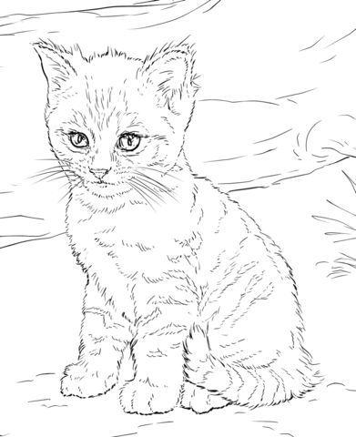 25+ einzigartige ausmalbilder katzen ideen auf pinterest