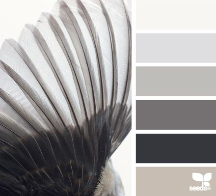 winged tones #taupe #gray #monochromatic [Heh. Meant to pin this to my 'Color' board, but it looks nice with all the other B+W photos, so I'll leave it here.]