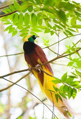 Vogels Tropisch kalender / Tropic Birds calendar / Oiseaux Tropicaux calendrier / Tropenvögel Kalender: Vogels Tropisch kalender / Tropic Birds calendar / Oiseaux Tropicaux calendrier / Tropenvögel Kalender