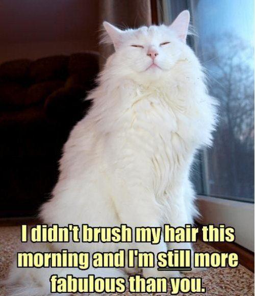 cute captions 16 Daily Awww: Funny captions make cute photos better (27 photos)