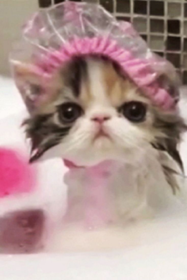This Kitty Is Taking A Bath When You See What She S Wearing Your Heart Will Explode From The Cuteness Video Cute Cats And Kittens Pet Holiday Cute Cats
