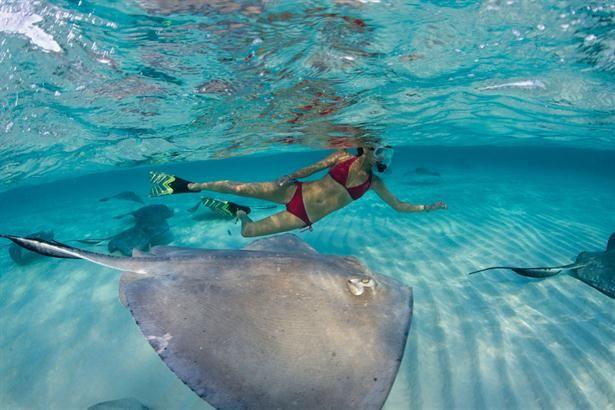 Nadar con Mantarrayas o Rayas Marinas en San Andrés, Colombia. Sigue estos conceptos