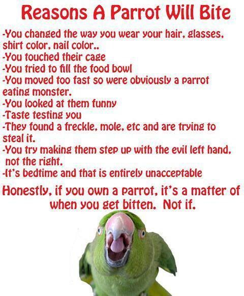 Haha cute (though I'd venture to say a biting parrot is no laughing matter - very poor behavior)