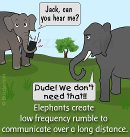 facts about the asian elephants