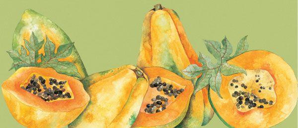 Papaya. Acuarela para empaque de frutas congeladas
