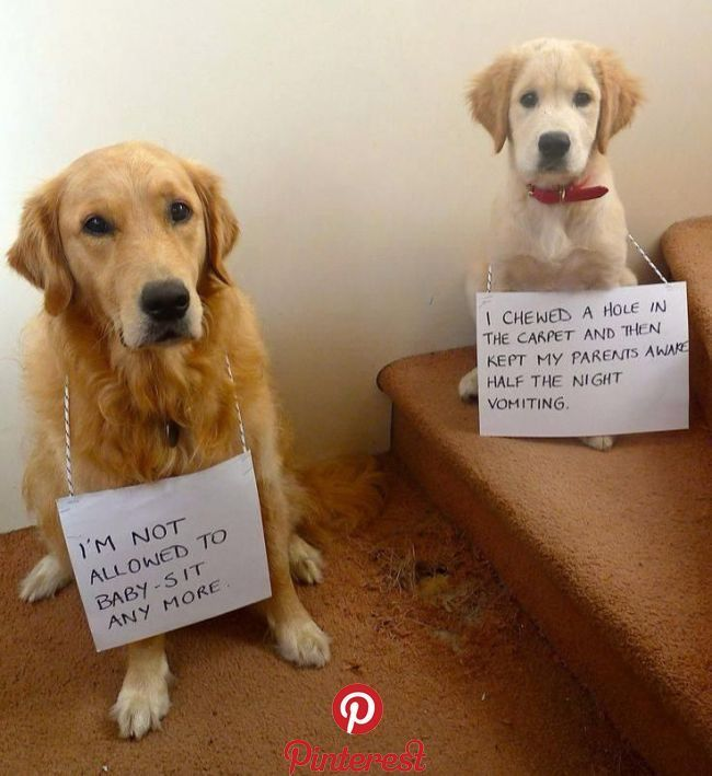 Too Too Funny Photos I Love Pinterest Dogs Puppies And Dog Shaming Alles Fur Pin Dog Shaming Cute Funny Animals Cute Dogs