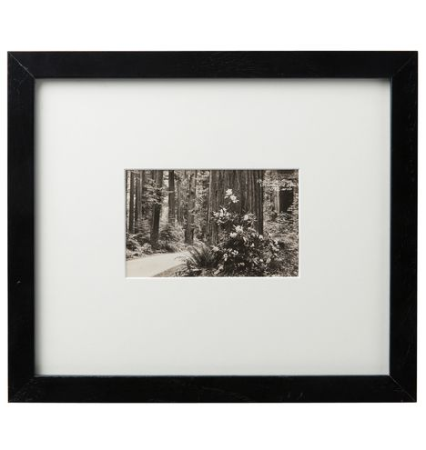Framed Postcard of Rhododendron Oregon