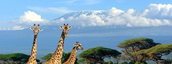 FlyDubai is low cost airline based in UAE Dubai and provides cheap flight tickets booking connection from Worldwide to Kilimanjaro international Airport via Dubai. and you can get budget Kilimanjaro trekking adeventures, EMAIL: info@kili-tanzanitesafaris.com  https://www.flydubai.com/en/destinations/africa/tanzania/kilimanjaro