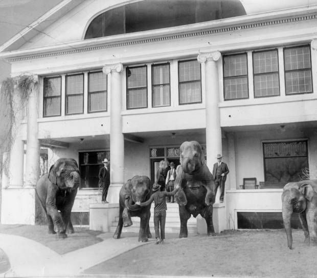 """Shown in this undated photo at the 101 Ranch's """"White House"""" are George, Zack and Joe Miller with elephants on the front steps."""
