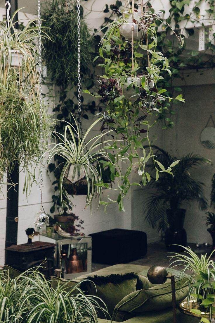 Pin On Indoors: Pin By Carla Corkin On Houseplants Hoarding