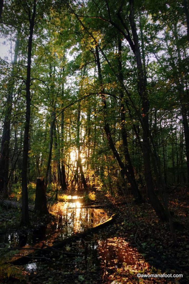 Kampinos National Park - a true natural gem right outside of Warsaw, Poland. awomanafoot.com #Poland #Warsaw #CultureTravel #Travel #VisitPoland