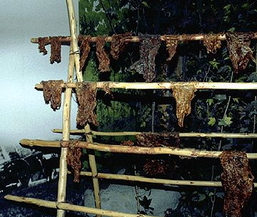 Drying buffalo meat for pemmican