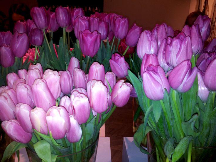 Kasia tulips