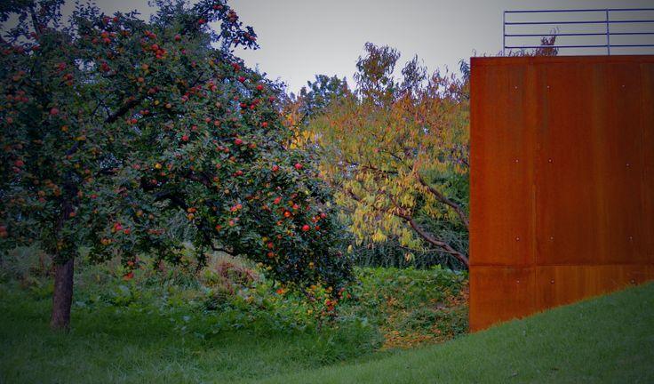 WARM RED. ALMOST FIERY. Wall of Corten steel against old apple trees. // rural garden design: Landscape d.o.o. / www.landscape.si / fb landscape slovenia /
