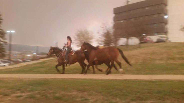 HorseFlee (1)