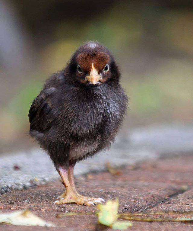 #bird #birdie #duckling #babybird #photography #canon #tattisphotos