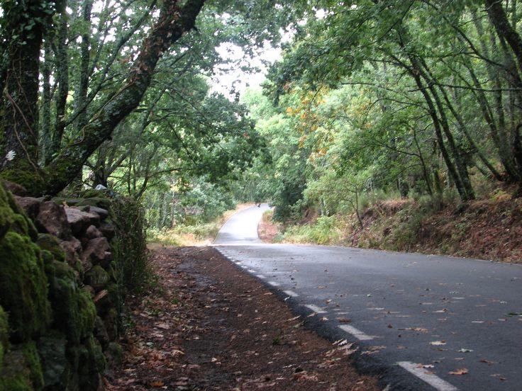 La carretera que une Cuacos de yuste con Garganta la Olla es una preciosidad.