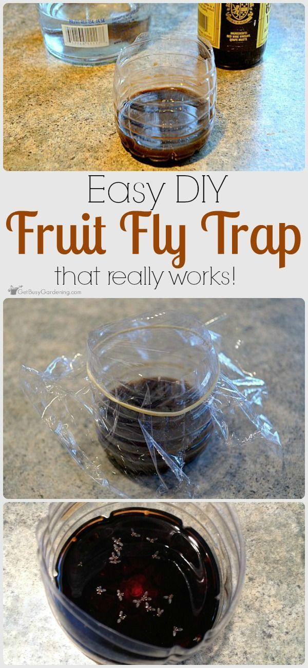Simply using fruit, juice or vinegar in a fruit fly trap won't kill the fruit flies. Try this easy DIY fruit fly trap that will both trap AND kill them.
