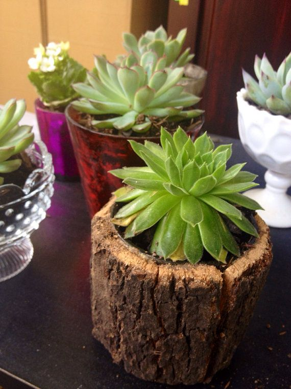 Succulent & Planter in Tree Bark Votive, Green Succulent, Home Decor, Office Decor, Desk Decoration, Gift for Succulent lover on Etsy, $12.00