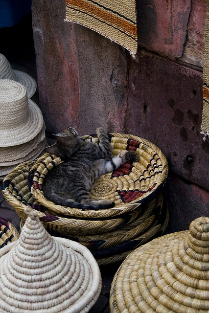 One of thousands. I found a lot of cats in Morocco. However, I didn't see any dog.