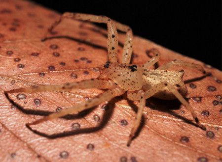 Crab spiders are masters of disguise.