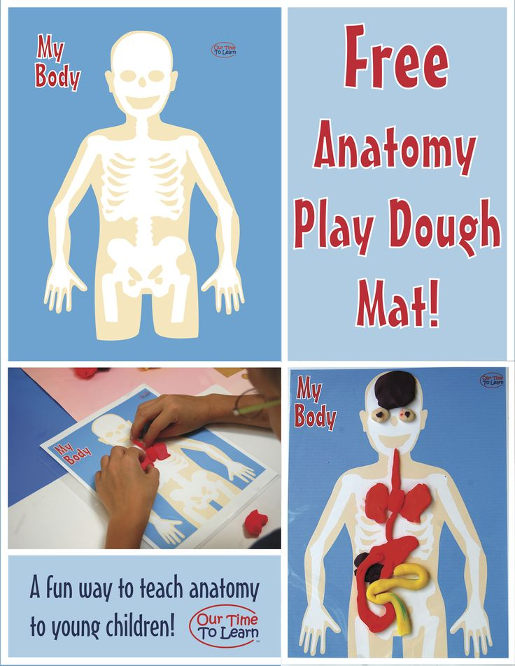 Human Body/Anatomy teaching tool - make play dough organs and put them in the right position on the mat - also comes in black and white - from Our Time to Learn. Preschool, kindergarten, 1st grade, homeschool