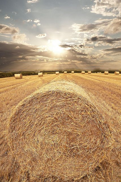 Balin' time: Farms Photos, Straws Bale, The Farms, Hay Fields, Photos Shoots, Country Life, Hay Bale, Beautiful Pictures, Cornwall England