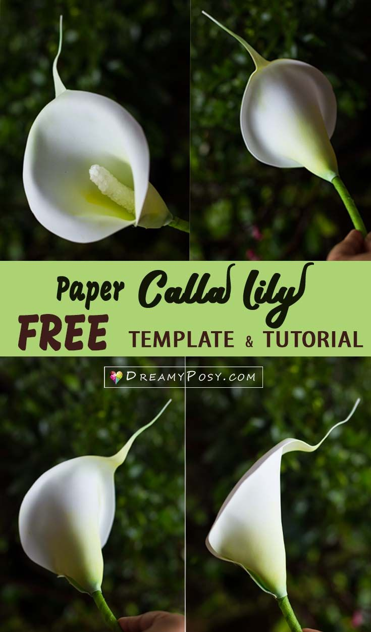 Paper Calla Lily with free template and tutorial #paperflower #flowertutorial #freetemplate