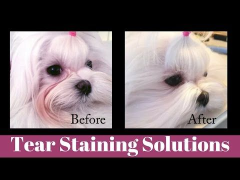 how to clean maltese eyes naturally
