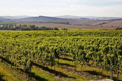 Za bílým vínem vyrazte na Uherskohradišťsko, za červeným na Slovácko - Aktuálně - Výlety - KOLO.cz