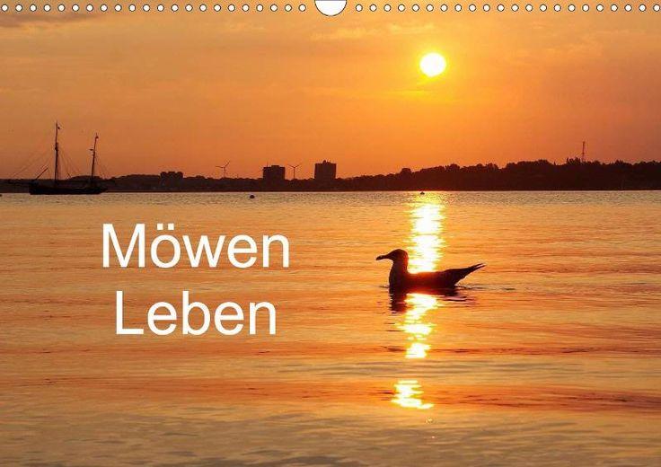 Möwen Leben - CALVENDO