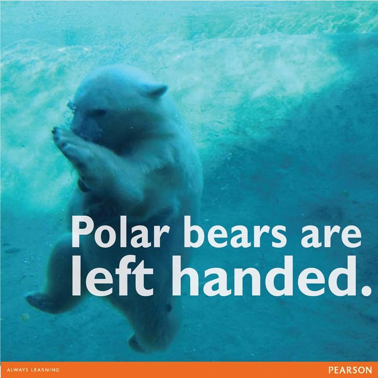 63 best images about Fun Facts on Pinterest   Planets ...
