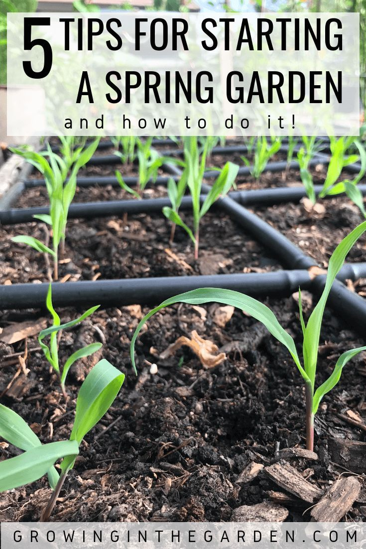 Tips For Spring Planting Spring Garden Checklist Growing In The Garden Spring Garden Organic Vegetable Garden Garden Checklist