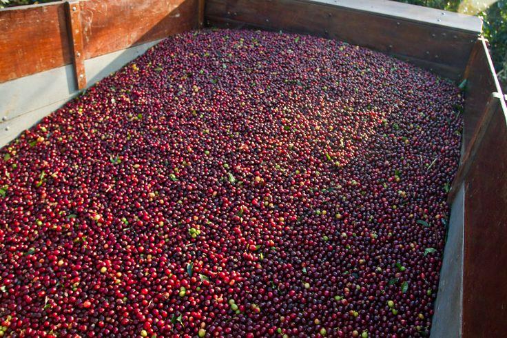 #káva Costa Rica Tarrazu |