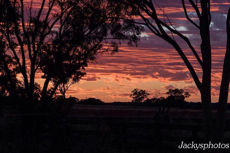 Sunset sky in the East. #justasprettyasthewest #myview #sunset #treeframed #redskyatnightshepherdsdelight  #dubbophotographer www.jackysphotos.com