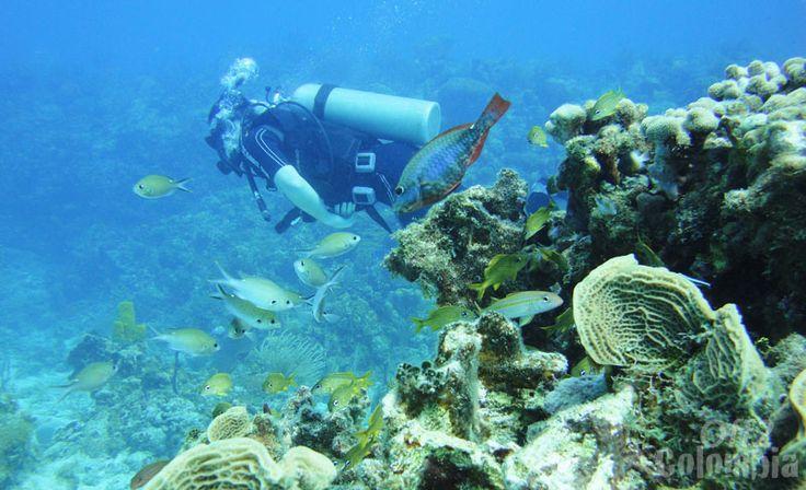 Buceo en Islas de San Andres y Providencia- Colombia