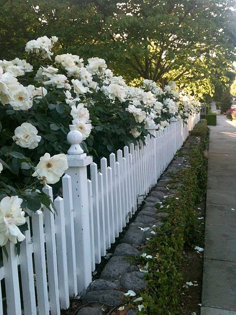 Beautiful white rose hedge along a low fence! I wonder how it looks in Winter. creek barrier