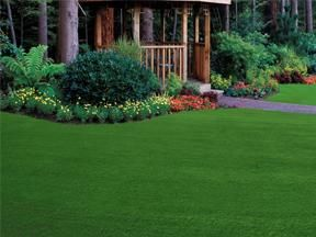 "Zoysia grass needs 50% less water than regular lawn and can be planted in ""plugs"" to existing lawn!!  looks interesting."
