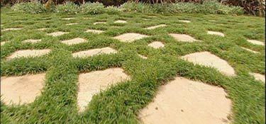 Fact Sheet: Lawn Alternatives - herbs