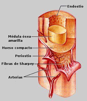 Anatomia humana juan garcia porrero