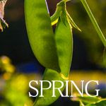 Planting your Spring Vegetable Garden - A Healthy Life For Me