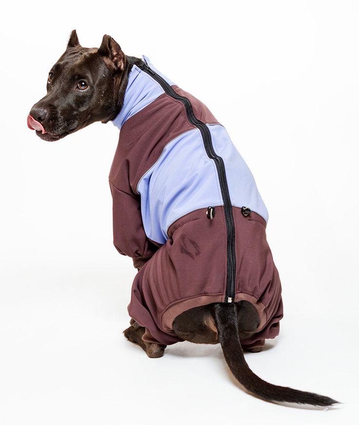 Softshell kutya overál - Kutyaruha