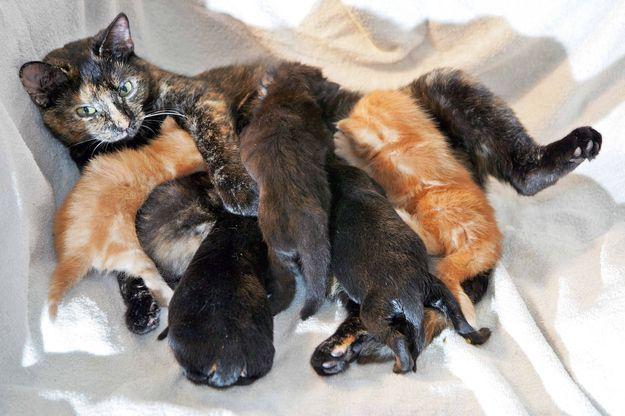 母親ネコとロットワイラー犬の子犬たち | 動物たちの愛情は相手を選ばない。19の証拠写真