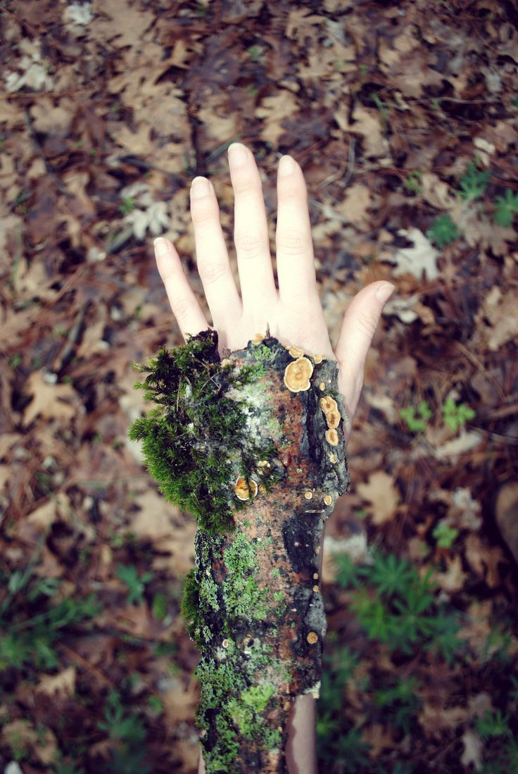Wood Mimicry/ Arboreal Mimicry/Physiology: User is made up of or can transform their body completely into wood. Users transformed form can be either anatomically identical to their normal form, aside of being made of wood, in which case it contains all to organs and is somewhat vulnerable to attacks. Alternately user can transform into homogenous matter, without any part of their form being more important than the other.