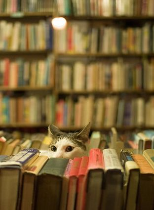 If they don't have a cat, then it isn't an official bookstore!! - Oxford books in Atl had a couple of cats