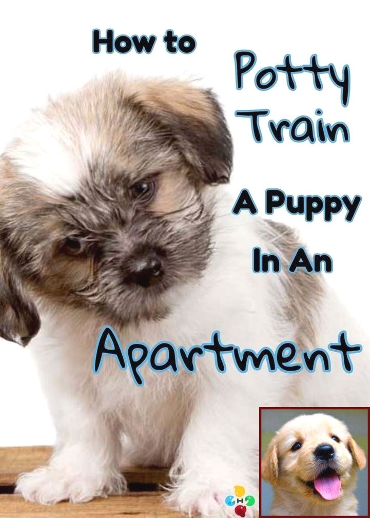 House Training A Puppy With Bells And Dog Behavior Gently Biting House Training Puppies Potty Training Puppy Puppy Training