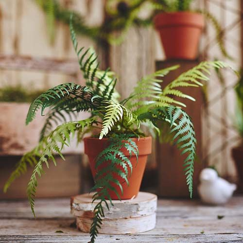 Potted Paper Fern Plant Printable