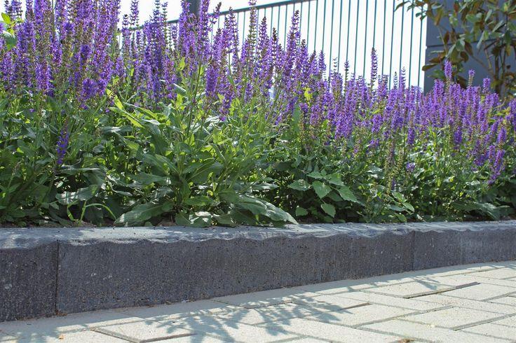 809 beste afbeeldingen van tuinontwerp - Creeren van een tuin allee ...